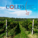 Collis-Veneto-Wine-Group